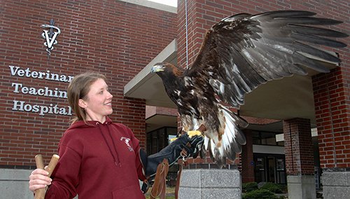 Amicus the golden eagle on student's arm