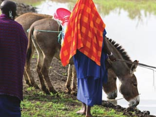 Women and animals at an African watering hole.