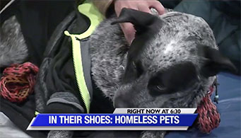 In Their Shoes- Homeless Pets