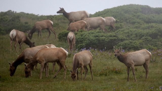 Heard of Elk