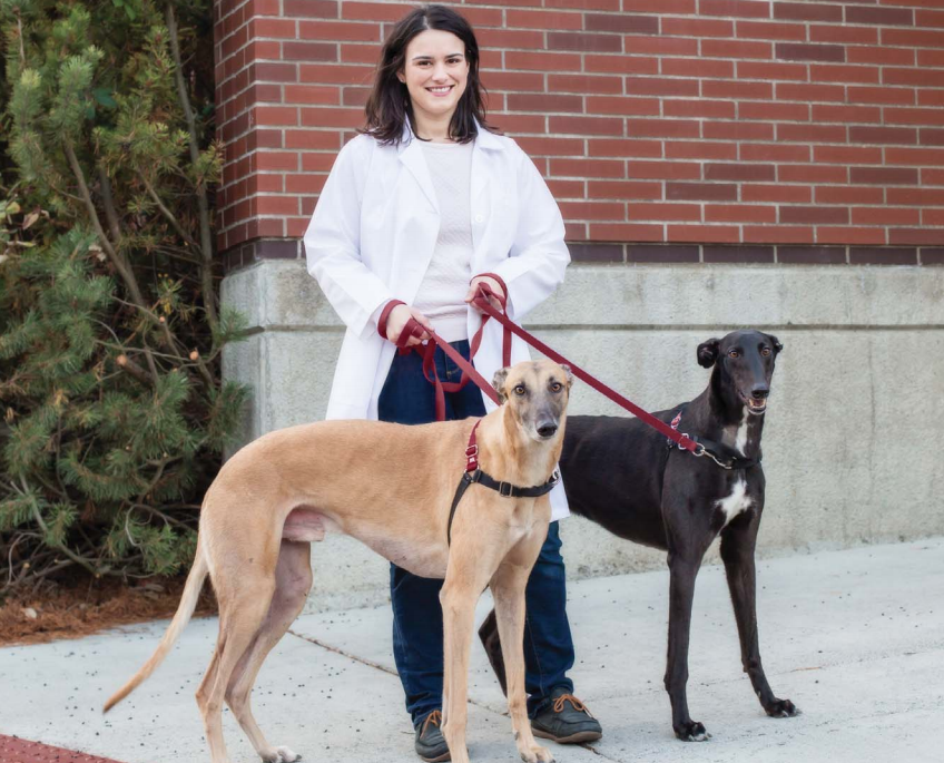 """Dr. Stephanie Martinez, of Washington State University, is shown with her 4-year-old male Greyhounds, from left, """"Otis,"""" and """"Seamus."""""""